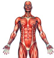 yogafx body anatomy